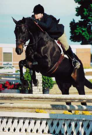 "Walkabout and Rachel Rock showing 3'3"" in Modified Hunter"
