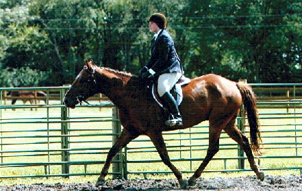 Art doing one of the things he did best - winning under saddle classes