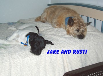 Jake and Rusti sleep while the family's busy, and are ready to play when it's time!