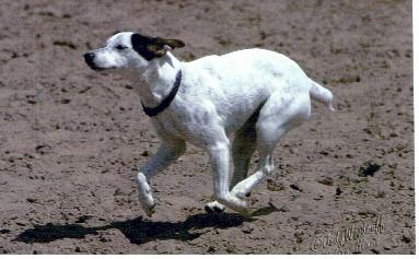 Huntermark Biscuit at full gallop, April 2003