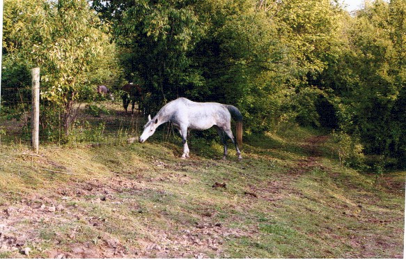 Dorothy makes the most of her pasture time by eating