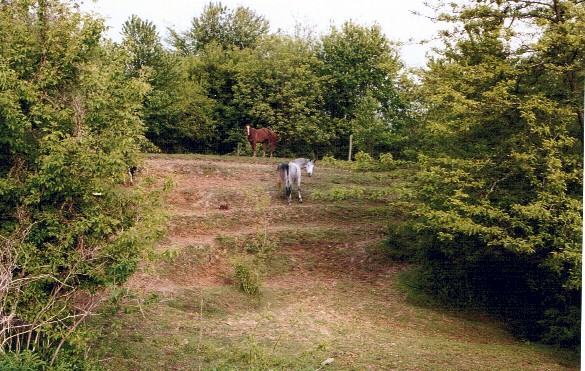"""This was a smooth hillside 25 years ago, but the horses made trails across the hill (parallel to the fence that used to run along the top of the hill) that eventually formed these """"steps"""""""