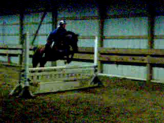 "He can jump 2'10"" - go Navvy!"