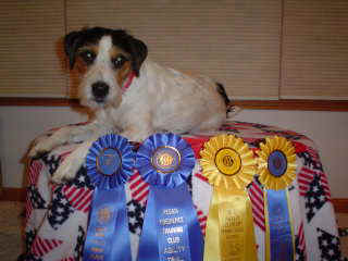 Mallory's grandson is a winning agility dog!