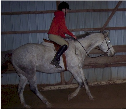 Amanda and Tempo - a dynamic cantering duo